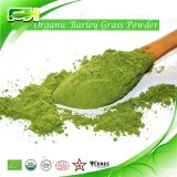 Organic Barley grass Powder/Juice Powder