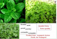 Mint, parsley, coriander