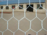 Hexagonal wire netting(Chicken wire)