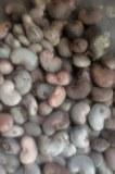 BENIN CASHEW NUT OFFER SEASON 2016.