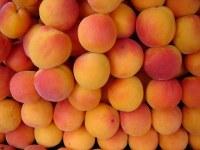 Abricot BOnne qualité