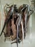 Smoked Dried Seahorse