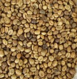 Coffee robusta to sell
