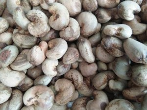 Quality Grade A Season Of Quality Raw Cashew Nuts For Sale