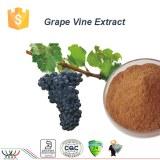 Pure natural balancing blood sugar antioxidant grape vine extract