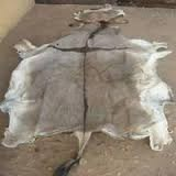 WET AND DRY SALTED DONKEY HIDES