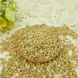 High quality sweet raw buckwheat,roasted buckwheat