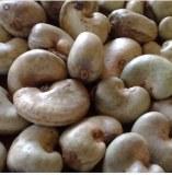 Dried Raw Cashew Nuts Un Shell