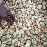 Import-export des noix d'anacarde