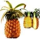 Vente d'ananas en grande quantité