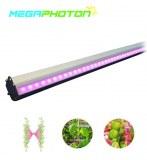 IP66 waterproof 150w Interlighting LED Grow Light for Greenhouse or Hydroponics horticu...