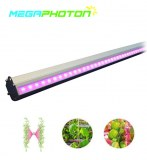 IP66 waterproof 150w Interlighting LED Grow Light for Greenhouse or Hydroponics horticu...