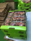 Food Fruit and Vegetables Export
