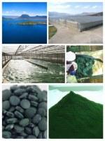 Manufacturer Natural and eco spirulina powder and tablets