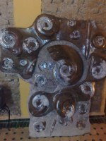 Plate ammonite fossilized marble