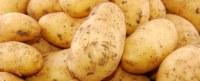 Pommes de terre de la Tunisie