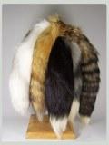 Foxtail natural
