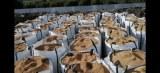 Olive stone /olive pits /olive kernel shell/almand kernel