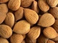 100% natural organic apricot kernel wholesales