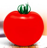 T43 Hongrui huge fruit f1 hybird red tomato seeds for sale