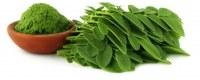 Wholesaler exporter of moringa seeds and moringa leaves