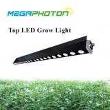 Megaphoton 200w 4ft Top LED grow light for greenhouse horticultural lighting projects