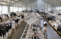 Steel Structure Cow House with CE in China for sale